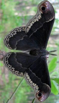 Темные бабочки