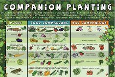 Good companion planting