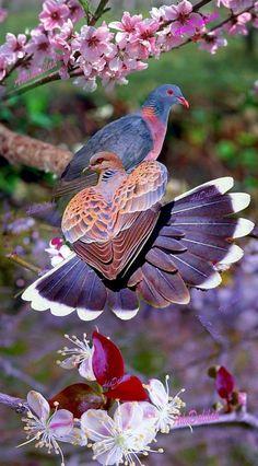 Beautiful birds, ,abstract birds, birds, bird k… – Animal Planet Funny Birds, Cute Birds, Pretty Birds, Most Beautiful Birds, Animals Beautiful, Animals And Pets, Cute Animals, Bird Gif, Bird Pictures