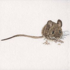 https://www.bluebirdembroidery.co.uk/collections/original-artwork (Wood Mouse Original Hand Embroidery)