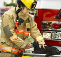 TIhree Cats Saved By Firefighters From House Fire