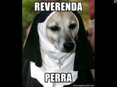 #perro #reverenda