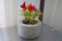 Concrete Planter  Sustainable Concrete Pot  Indoor by AnsonDesign