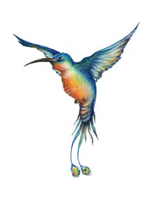 Hummingbird on Behance by Begoña Fumero