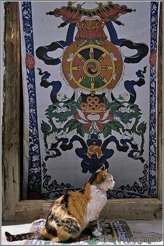 chat tigré devant une porte Tibétaine | Koty na świecie (4 ...