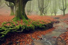 Bing Images - Spain Forest - Moss-covered tree roots in Gorbea Natural Park, Basque Country, Spain (© Rosa Isabel Vazquez/plainpicture) Forest Village, Weird Trees, Tree Planters, Landscaping Around Trees, Mystical Forest, Tree Roots, Natural Park, Basque Country, Amazing Nature