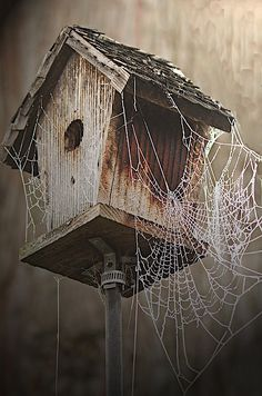 Abandoned house covered with spider webs.
