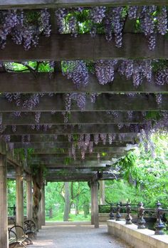 Wisteria Pergola--soon to be a reality off to the side of the veranda, though not as big as this one in Central Park.