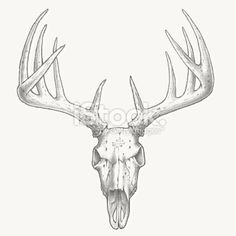 How To Draw A Deer Skull Deer Skull Tattoo Step By Step Skulls together with Clipart BcyEqp4Ri besides Drawings Of Deer Skulls further Deer Rack Clipart 26074 further Collectionddwn Deer Skull Decals. on deer mount clip art