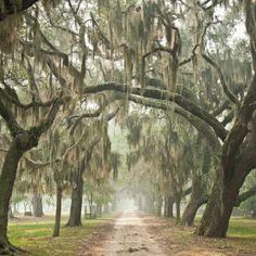 This looks a bit eerie. I dig it. Charleston, South Carolina