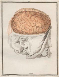PL. III. Traité d'Anatomie et de Physiologie (Vol. 2 neuroanatomy) by Félix Vicq D'Azyr (https://pinterest.com/pin/287386019946939603/) 1786 b by peacay, via Flickr