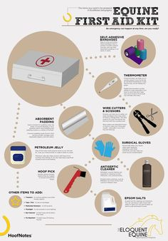 equine first aid kit list - Google Search