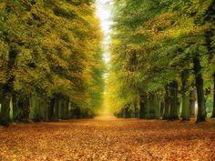 Valdštejnská lipová alej na podzim | Jičín - Galerie: Valdštejnská lipová alej Country Roads, Google