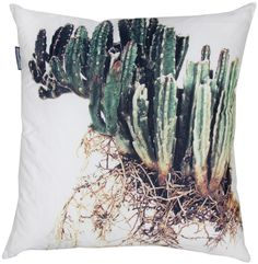Beautiful pillows (printed with photos by Clinton Friedman).