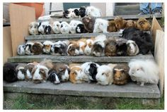 I really want this many piggies.
