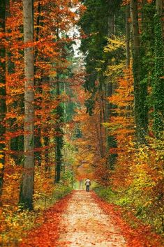 ImageFind images and videos about nature, autumn and forest on We Heart It - the app to get lost in what you love. Beautiful World, Beautiful Places, Beautiful Pictures, Autumn Scenery, Fall Pictures, The Great Outdoors, Autumn Leaves, Autumn Trees, Paths