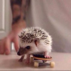 I am gonna hang ten! Or as many little toes as I have. How many DO I have? (I need an animals on skateboards tag)