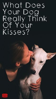 What does your dog think of your kisses? Dog Body Language, Pet News, Dog Training Tips, Brain Training, Yorkie Puppy, Dog Agility, Girl And Dog, Cute Kittens, Dog Behavior