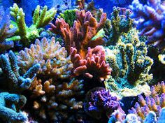 AmO Images, Images of the beautiful underwater world, underwater life. Coral Reef Pictures, Colorful Pictures, Sea Aquarium, Sea Plants, Coral Garden, Saltwater Tank, Underwater Life, Sea Fish, Colorful Fish