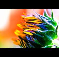 flowers - Fine Art - eric marcus studio