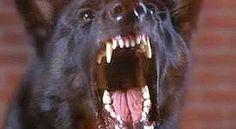 Bimbo di due anni sbranato da un cane: è morto - http://www.sostenitori.info/bimbo-due-anni-sbranato-un-cane-morto/260256