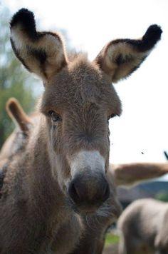 Wobbly ears ❤️