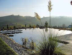 Ecological pool, look of natural pond, stone, grasses, by Fernando Pozuelo