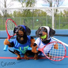 """""""Tennis anyone? It's always 'love-love' here ❤️"""" ~ Crusoe Tag a friend who's gunna need to see the video…"""