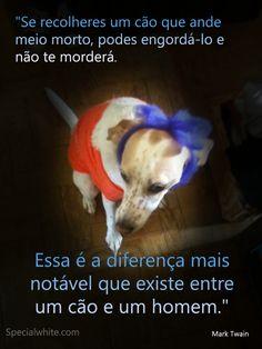 Se recolheres um cão que ande meio morto, podes engordá-lo e não te morderá… | Words full of Feelings