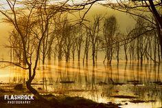 Kenya morning mist.... Morning mist @ Lake Nakuru, Kenya