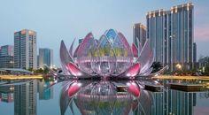 Lotus Building I STUDIO505   architektT