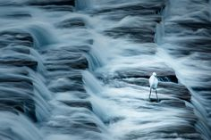 Picture of white bird standing in waterfall