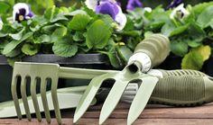 Zahradníkův kalendář na celý rok: kdy sít a sázet zeleninu, květiny, dřeviny? - Užitková zahrada Gardening, Tableware, Dinnerware, Garten, Tablewares, Lawn And Garden, Garden, Place Settings, Square Foot Gardening