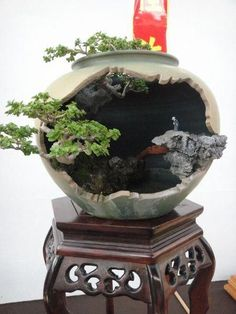 Taking care of a bonsai tree for the first time can become a nerve-wracking experience, especially if you don't know how to maintain your miniature tree properly. Miniature Garden, Indoor Bonsai Tree, Bonsai Pots, Little Garden, Ikebana, Zen Garden, Japanese Garden, Plant Decor, House Plants Decor