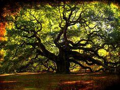 Fieggentrio: Top 10 van bijzondere bomen.