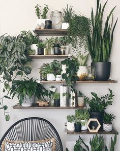 That's a beautiful indoor jungle! #houseplants