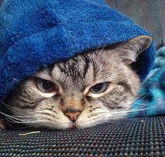 Loki the cat!!! - (more at source)