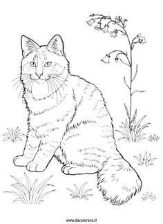 Pet Cat Coloring page Mother