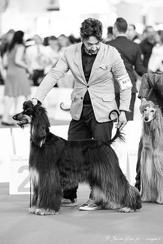 Afghan Hound, Dog Show, Milan, Dogs, Photography, Fictional Characters, Art, Art Background, Photograph
