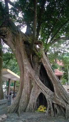 Chùa Lân - Thiền viện trúc lâm Yên Tử