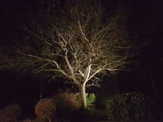Oak Plants, Plant, Planets