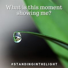 What is this moment showing me? What of myself is being reflected back to me? What is the significance of what is happening? What is the underlying energy that is being expressed for me to see? What opportunity is being offered me in this moment? Show Me What, Opportunity, Reflection, In This Moment, Shit Happens