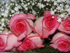 65 Roses, Cystic Fibrosis