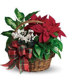 Christmas Flowers Delivery Louisa KY - Farmhouse Memories Get Well Flowers, Fast Flowers, Flowers Today, Christmas Flower Arrangements, Christmas Flowers, Christmas Wreaths, Christmas Decorations, Poinsettia, Rama Seca