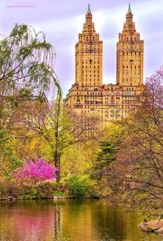 Central Park in all its glory.