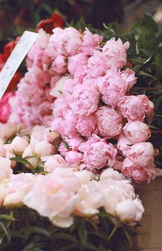 Peonies: the world's most beautiful flowers