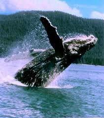 Juneau, Alaska and Humpback whales