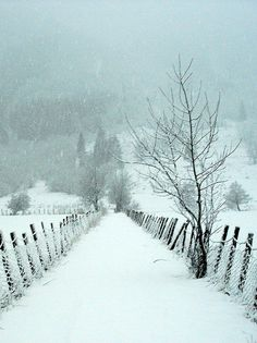 The whiteness of the snow contrasts beautifully with the dark lines of the fence and the soft blue and grey of the background.
