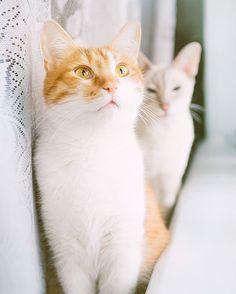 Murchik cat and Nikotin cat by abrakadabra_art