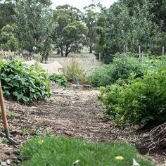 Up early, moving and timing sprinklers to keep it all alive in this week's heatwave. Potatoes, tomatoes, eggplant, capsicum, parsley, pears and apples weeks away from harvest, rocket, silverbeet, basil and sage, ready to eat.
